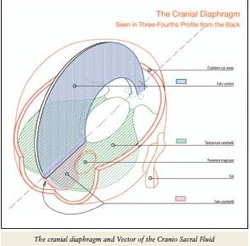 The Cranial Diaphragm