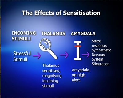 The Effects of Sensitisation