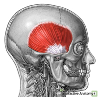 Pin pictures of tmj exercises patient handout on pinterest