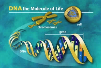 DNA Molecules of Life