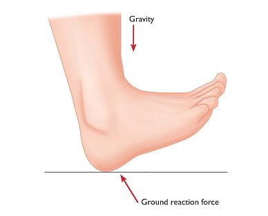 Hi Res Fig 2 Foot and Ground Reaction