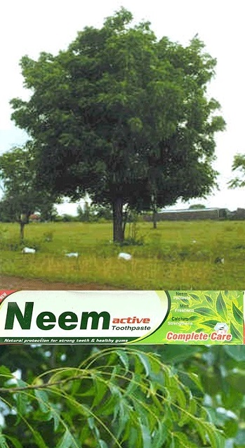 Neem tree and toothpaste