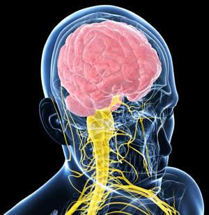 Alzheimers & Dementia Nutritional Research