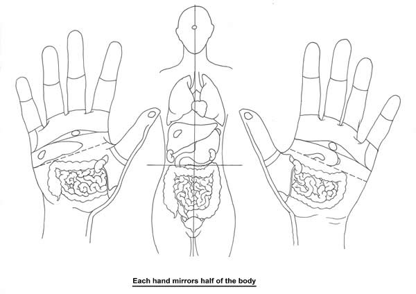 Each hand (or foot) mirrors half of the body