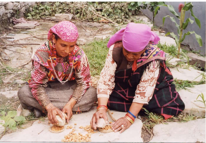 Apricot Seeds from the Himalayas