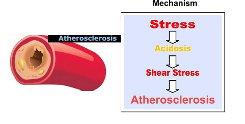 Mechanism Atherosclerosis
