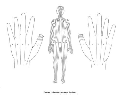 The ten reflexology zones of the body