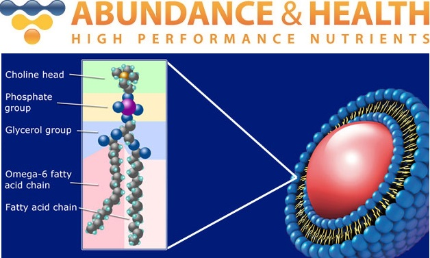 Abundance Logo + Phospholipid Diagram