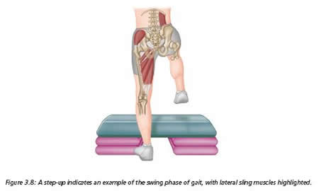 The Glutes and the Gait Cycle - Extract from The Vital Glutes