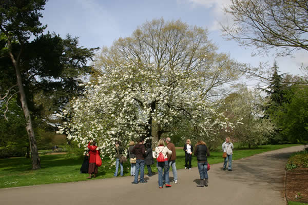 One of the author's Kew Garden teaching tours