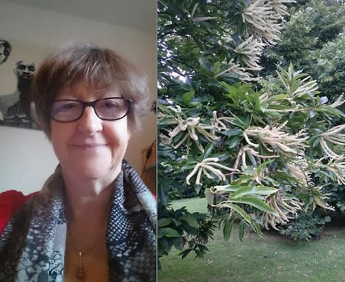 Anna Jeoffroy + Sweet Chestnut Collage