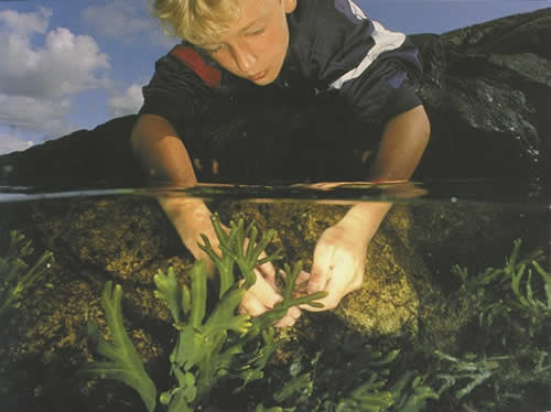 Underwater seaweed with boy