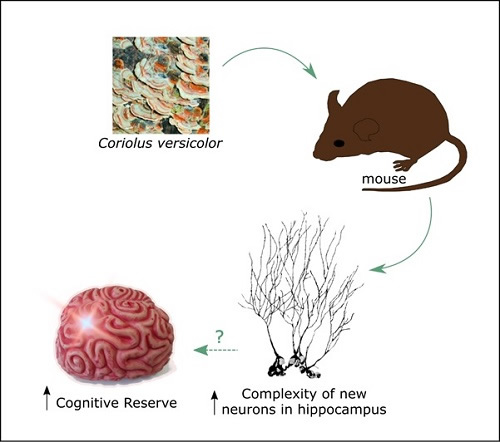 Coriolus Research Neurodegenerative Conditions