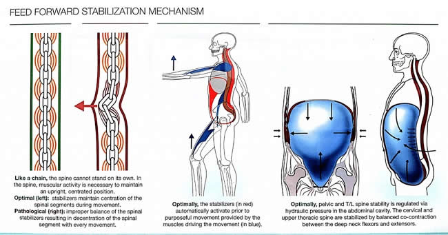 Feed-Forward-Stabilization-Mechanism-Exercises-that-cause-back-pain