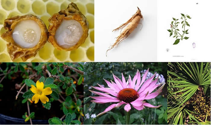 Composite Royal Jelly, Ginseng, Capsicum, Damiana, Echinacea, Saw Palmetto