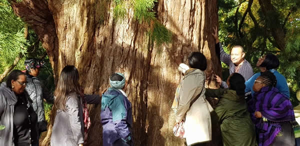 Feeling the Energy of a 'Baby' California Redwood