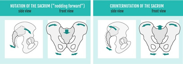 Movements of the Sacrum Nutation and Counter Nutation