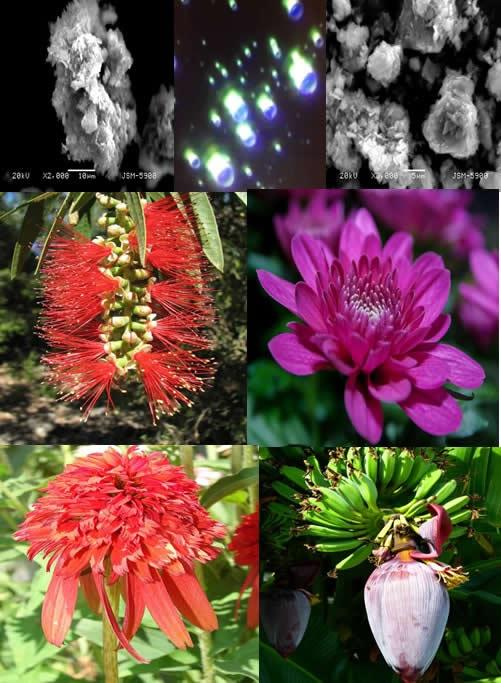 Collage Flower Essences and Zeolite Clinoptilolite