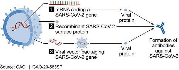 Vaccine_candidate_mechanisms_for_SARS-CoV-2