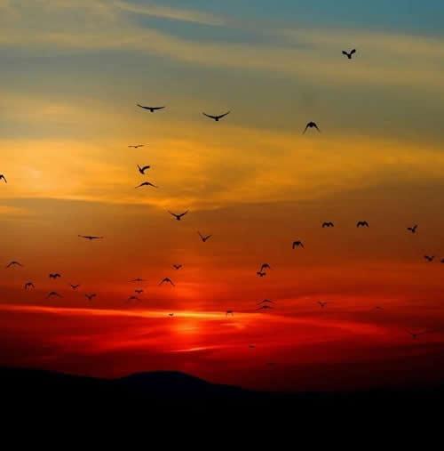 Kish Modasia sunset