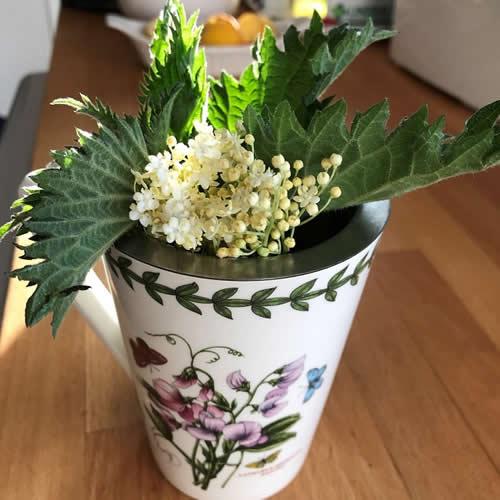 Hayfever relief elderflower and nettle tea