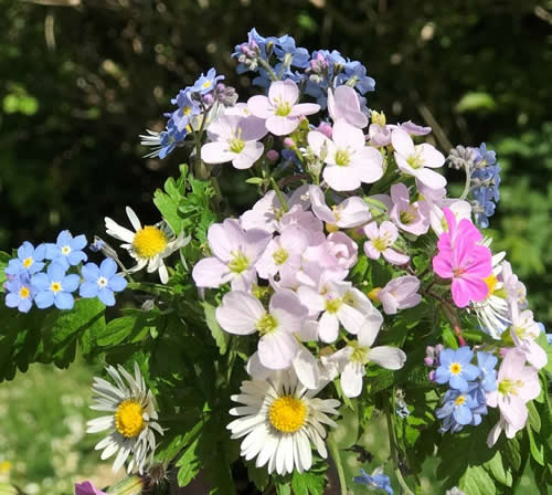 Wildflower bouquet from the meadow forget-me-not, daisy, cuckoo flower, herb Robert