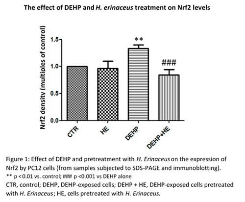 Fig 1 Effect of DEHP and pretreatment with H Erinaceus
