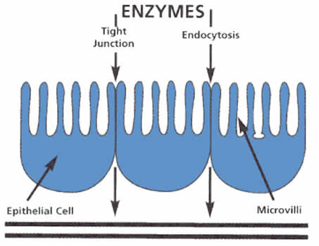 Enzyme Table